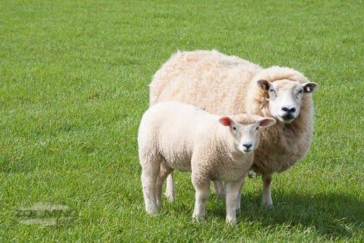 wool flooring from fibre